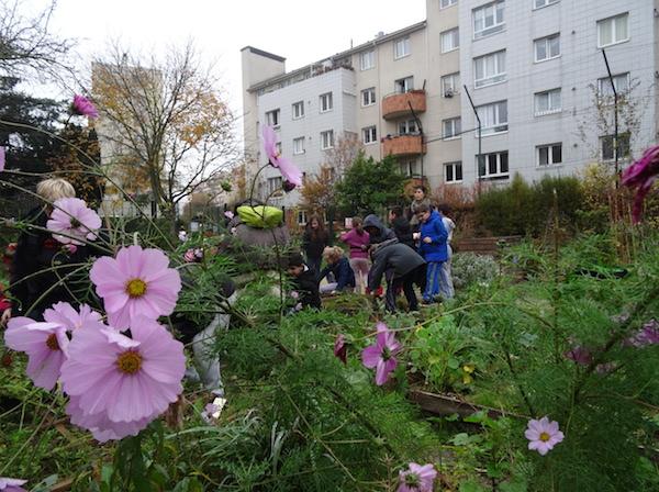 Les élèves de l'école Paul Bert, à Malakoff,  viennent régulièrement jardiner leur parcelle dédiée. Crédits Photo : Geneviève