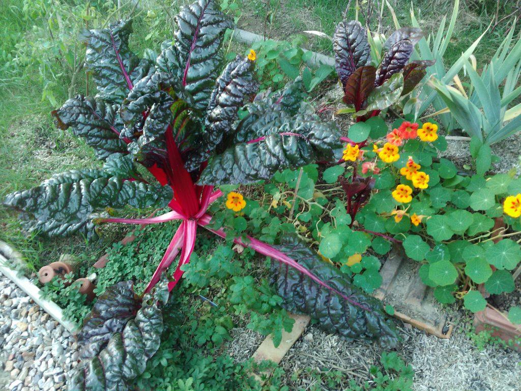 Les dernières couleurs du jardin le 30 octobre 2016